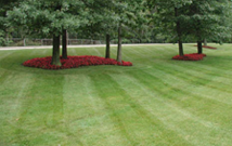 Lawncare Maintenance
